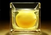 杯中的柠檬 写实ICON图标版
