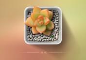 黄丽多肉植物