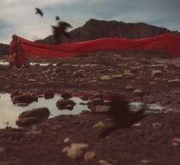 孤岛与飞鸟