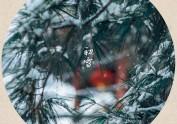 雪是人生的清寂与欢欣