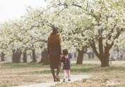 春梨花盛开