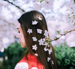【春の颜】樱花和服写真