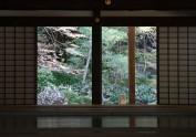 樱花季日本之旅