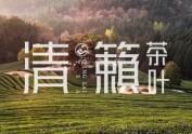 清籁茶品牌形象设计【黑马奔腾策划设