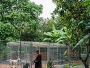 越南臨時MON寵物收容所設計,堪比豪宅!