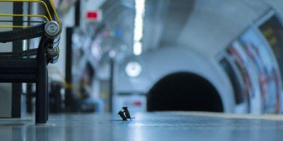 兩只老鼠之間的地鐵大戰照片,贏得了的相關圖片