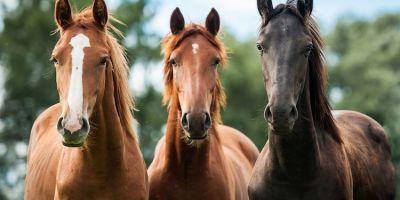 学习如何从3个不同的角度画马头
