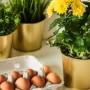 煮熟的鸡蛋水不要倒,拿来浇花