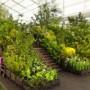 美观与实用并存的城市花园