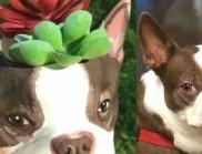 把你狗狗的样子3D打印成花盆,这产品太有创意了