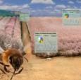 ehero的智能蜂巢实时监控蜂巢的健康状况,
