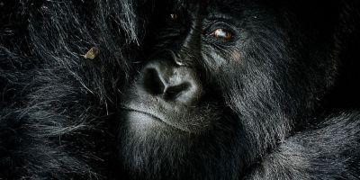 世界顶级野生动物摄影师齐聚一堂,为的相关图片